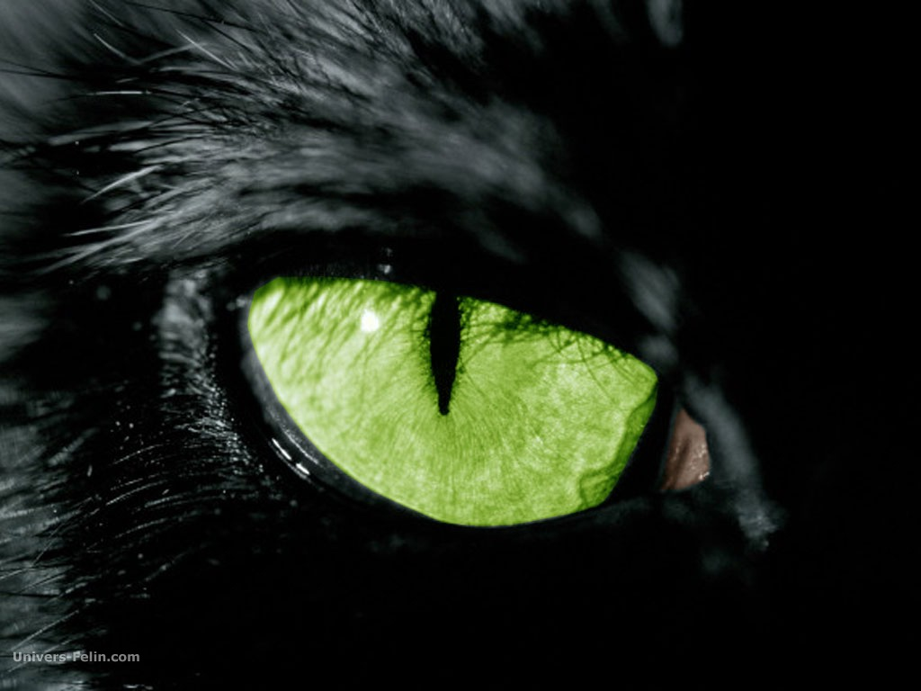 http://sites.animaux.free.fr/animaux-domestiques/photos-chats/img/images/photo-regard-chat-noir.jpg