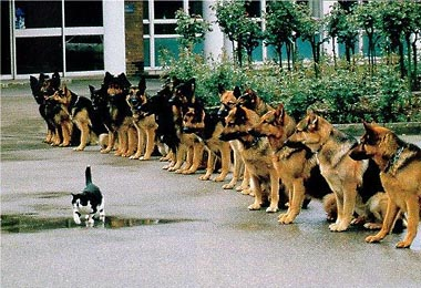 humour-animaux (11).jpg (380×260)