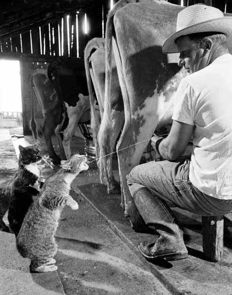 humour-animaux (3).jpg (471×600)