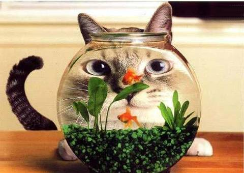 http://sites.animaux.free.fr/animaux-domestiques/photos-humour-animaux/img/images/photo-humour-animaux%20(2).jpg