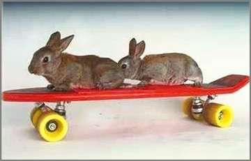 photo-humour-animaux (18).jpg (360×231)
