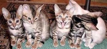 photo-humour-animaux (3).jpg (358×163)